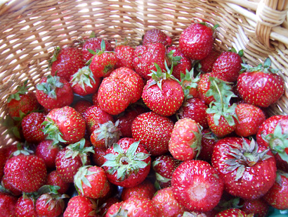 Zephyr Strawberries